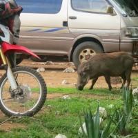 Motorsafari in Oeganda