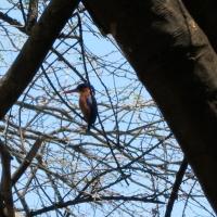 Vogels spotten rond de evenaar