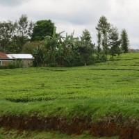 Rondje Kenia 6