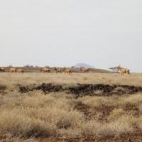 Turkana Route III - 1000km offroad 39