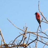 Vogels kijken 10